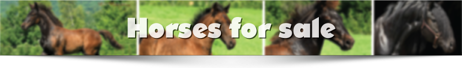 Horses-for-sale